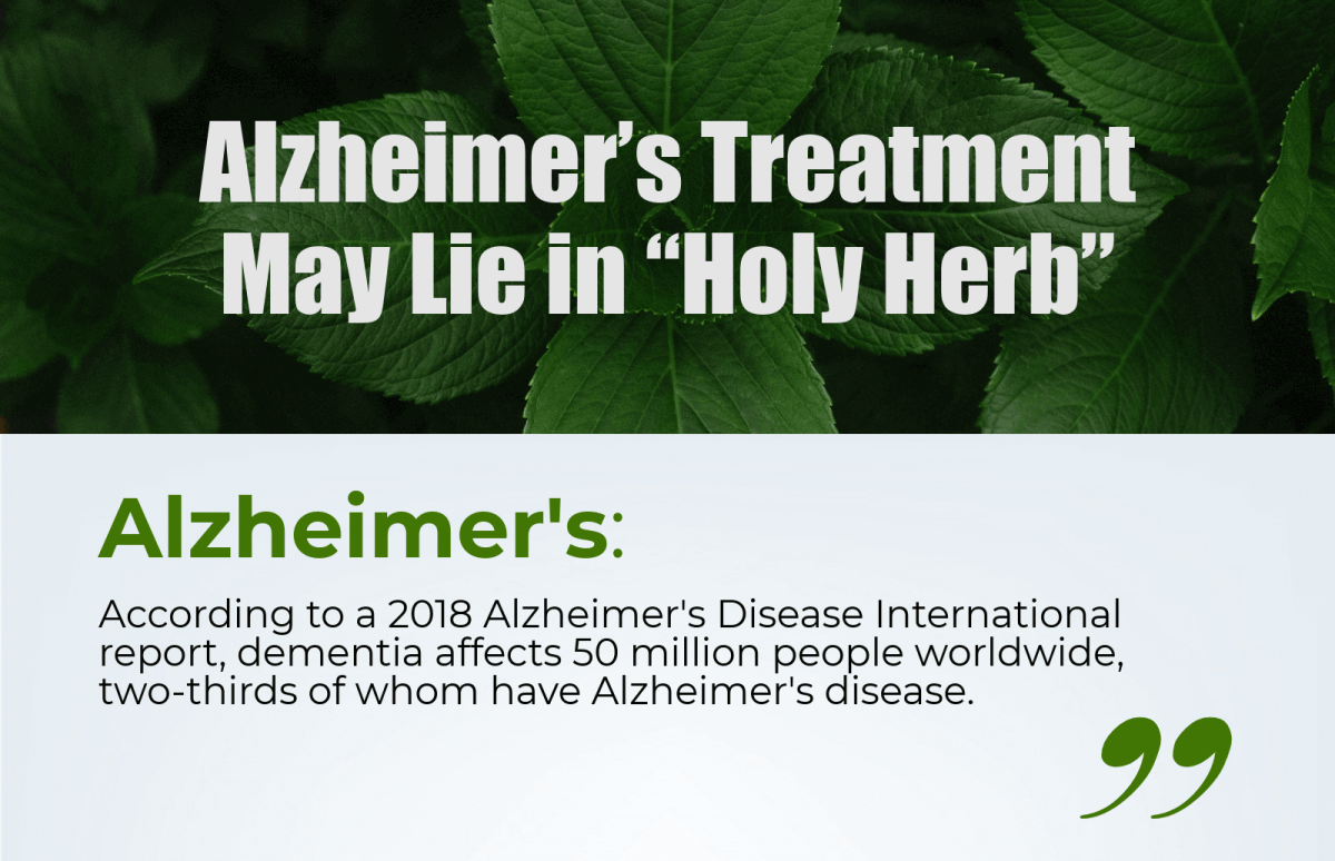 """Holy Herb"" May Be the Key to Effective Alzheimer's Treatment"